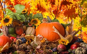 autumn, harvest, vegetables, fruit