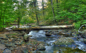 river, forest, stones, log (crossing), landscape