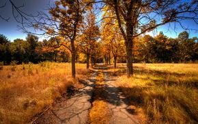 route, arbres, automne, paysage