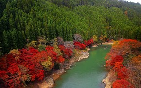 autumn, forest, river, landscape