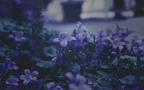 Flowers, Bells, macro