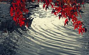 водоём, волны, сучья деревьев