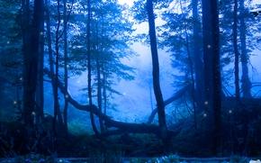 ночь, лес, пруд, светлячки