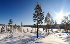 inverno, alberi, sole
