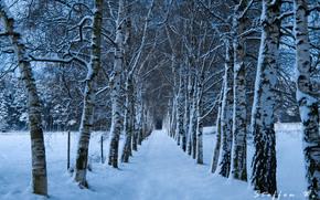 冬季, 树, 道路