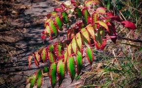 arbusto, serbal, Naturaleza