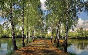 t, tang, parc, Bouleau, paysage