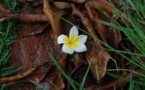 pietra, fogliame, erba, fiore