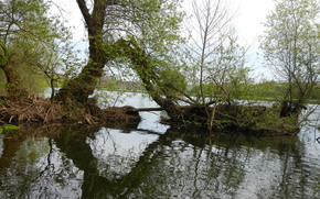 tang, arbres, lot, Nature