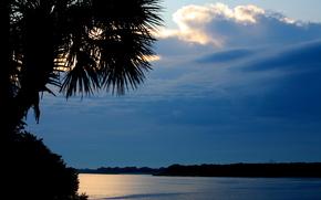 tramonto, fiume, paesaggio, palma