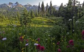 Mountains, road, Flowers, landscape