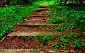 descent, Wake up, vegetation, stage, nature