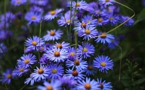 花卉, 草, 性质