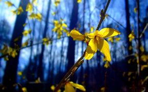 bush, flower, macro