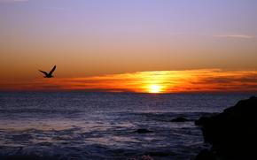 tramonto, mare, gabbiano, paesaggio