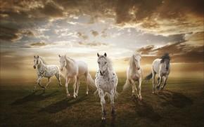 закат, поле, лошади