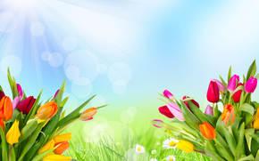 Тюльпаны, Лучи света, Цветы