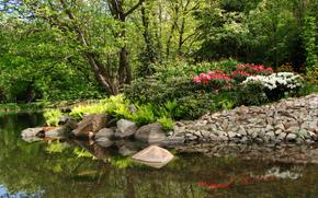 parco, stagno, alberi, pietre, paesaggio