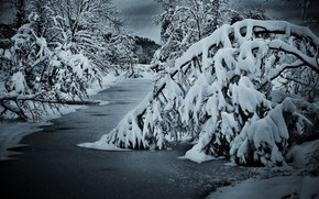 Winter, night, river, forest, landscape