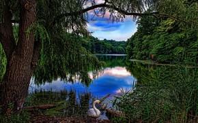 lac, arbres, cygne, paysage