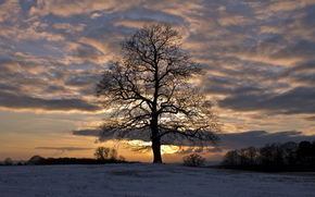 Winter, snow, field, Trees, evening, sunset, sky, clouds