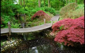 花园, 公园, 池塘, 桥, 树, 性质