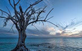 mer, arbre solitaire, paysage