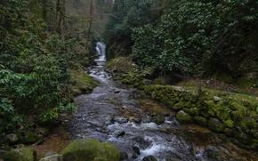 река, лес, водопад, природа