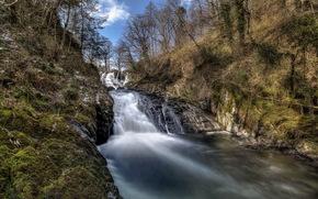 fiume, foresta, primavera, natura, paesaggio