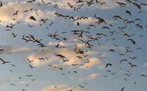 небо, птицы, природа