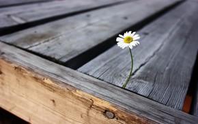 fiore, vita, solitudine, gioia