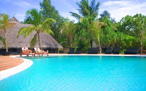 Maldive, tropici, palma