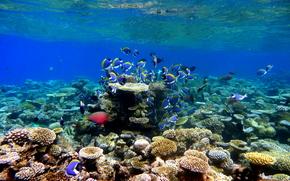 Мальдивы, тропики, рыбы