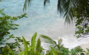 mer, branche, Nature