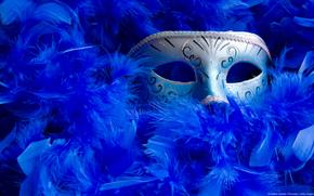 mask, blue feathers, masque, bleu, plumage, plumage et masque