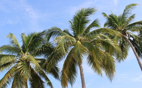 thailand, Palms, sky