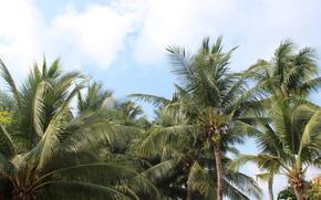 tailandia, cielo, Palms