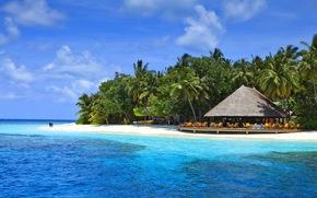 Мальдивы, тропики, пляж, пальмы
