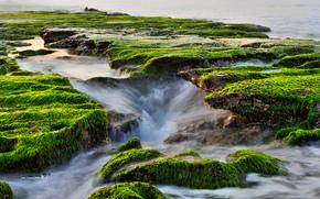 sea, coast, moss, Streams