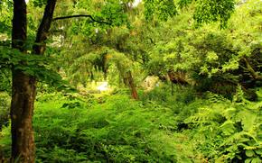 сад, деревья, природа, зелень