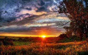 puesta del sol, campo, Los rboles, paisaje