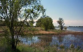 lago, alberi, natura