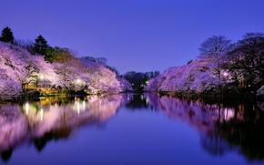 Япония, Осака, город, парк, озеро, освещение, фонари, ночь, синее, небо, деревья, вишня, сакура, цветение