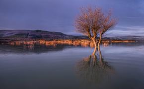 холмы, озеро, дерево, тучи