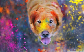 dog, in paint,