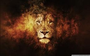 Lwe, Knig der Tiere