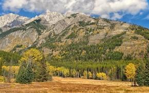 banff national park, alberta, canada, Банф, Альберта, Канада, осень, лес, деревья, горы