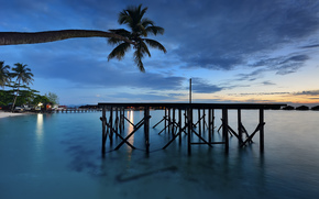 sea, palm, platform, bungalow, evening
