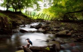 fiume, alberi, uccello