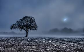 поле, дерево, жнивьё, туман, утро